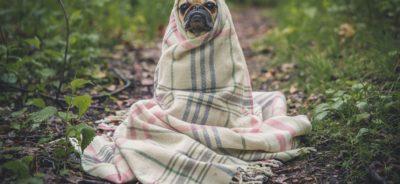 El perro y su manta.